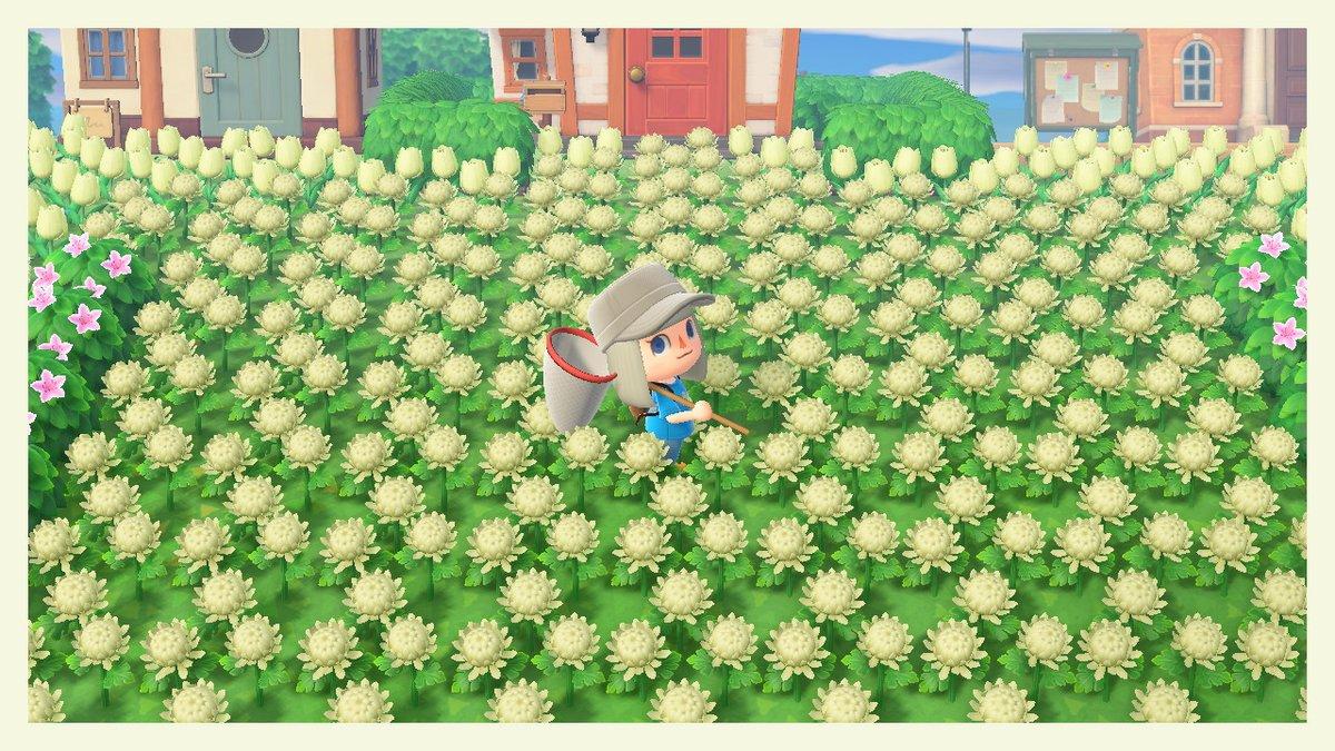 花 増殖 森 あつ 【あつ森】高確率で咲く青いバラの作り方|増やし方と使い道【あつまれどうぶつの森】|ゲームエイト