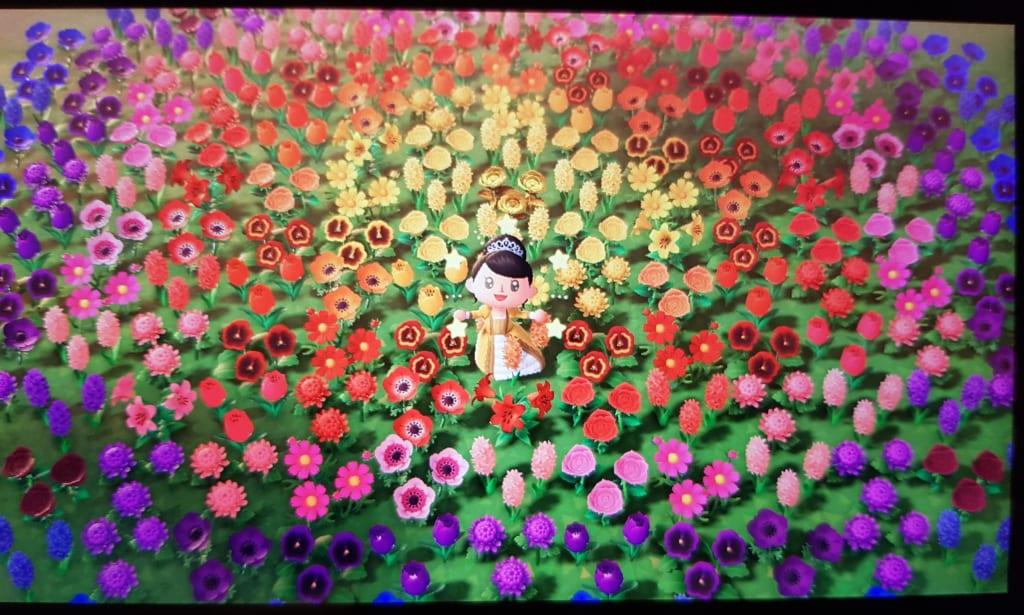 菊 あつ の 森 緑