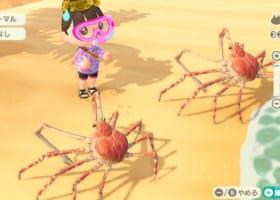 【最難関】タカアシガニを飾ると超リアル!【海の幸】