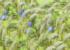 【秋の雑草】すすきが超可愛い!すすきを生やす方法とは?