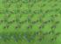 増えすぎた花、みんなどうしてる?